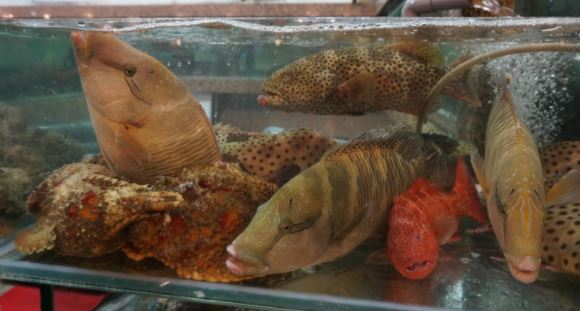Report Exposes Illegal Trade of Live Reef Fish in Hong Kong