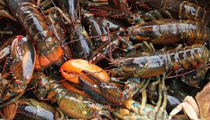 New Lobster Restrictions Considered in Southern New England as Stock Declines