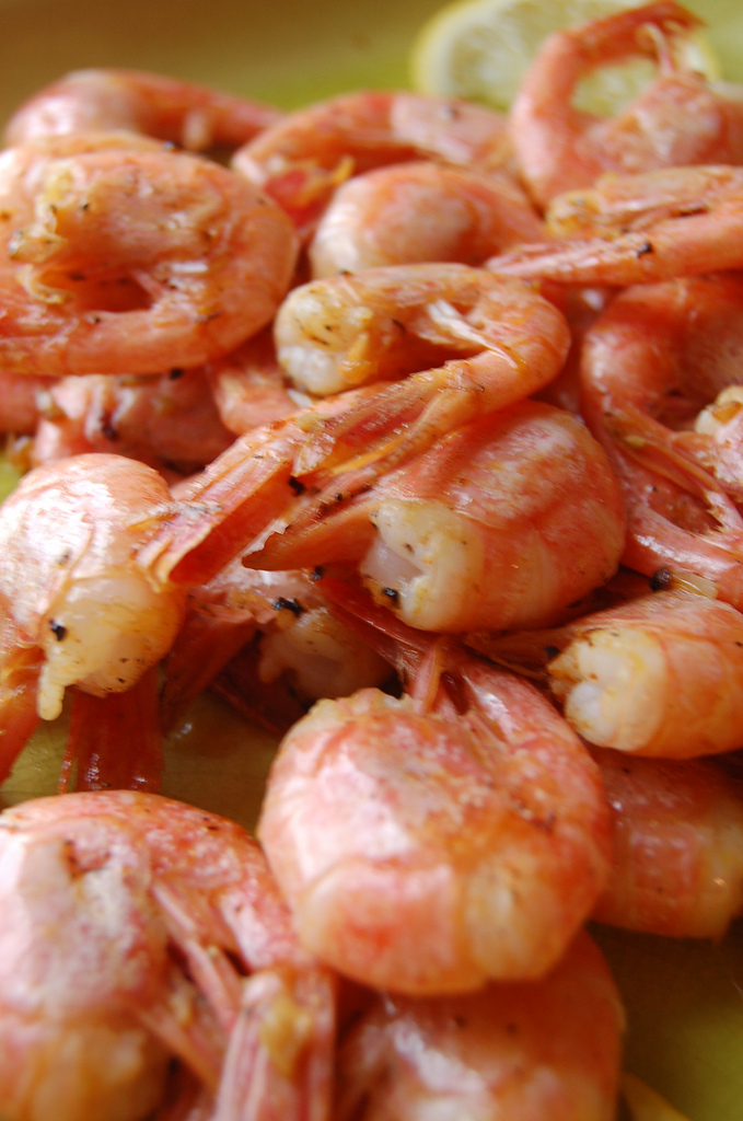 A Food Writers Quest for Sustainable Shrimp With Maines Shrimp Fishery Closed
