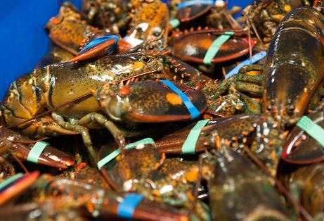 ASMFC Votes Down New Rules for Southern New England Lobster