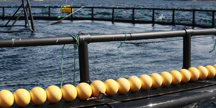 Broodstock Capital Invests in Norwegian Salmon Industry Track and Trace Software