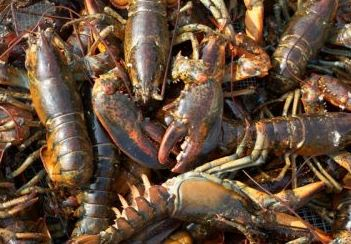Stronger Canadian Dollar Creating Standoff Over Falling Shore Lobster Prices in New Brunswick