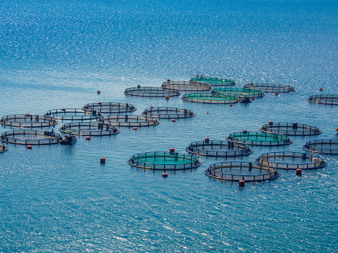 Open Ocean Aquaculture More Viable in Age of Climate Change Say Scientists