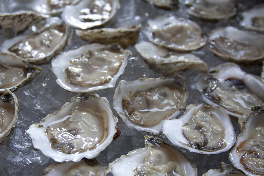 Oysters among Washington States Most Lucrative, Endangered Crops