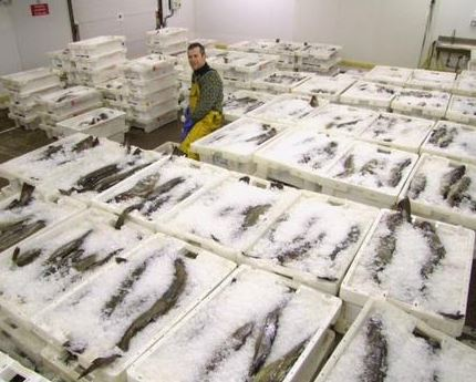 How Shetland Business Owner David Polson is Making Waves with Salt Cod