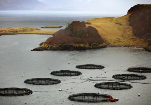 Members of Scottish Parliament Raise Concerns about Impact of Salmon Farming