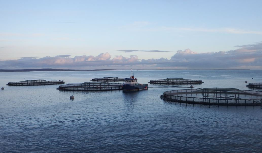 Scottish Sea Farms Spends Over £100m in 2017 on Scottish Goods and Services