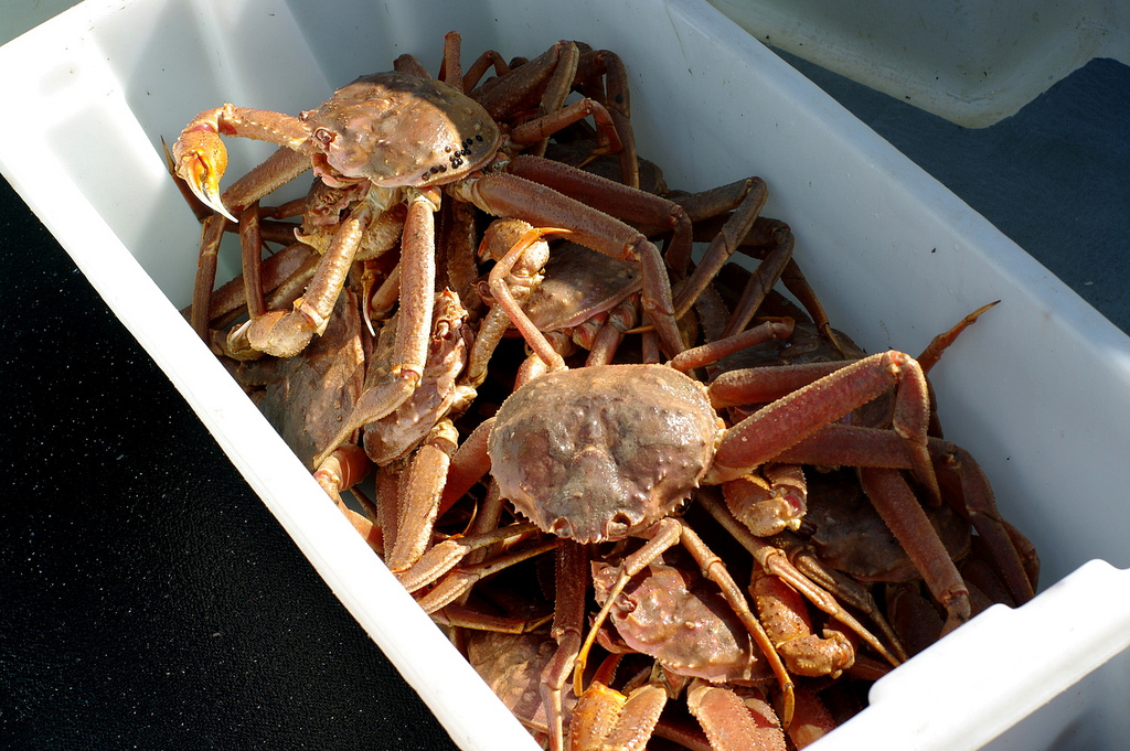 Southeast Alaska Tanner Crab and Golden King Crab Season Opens February 10, 2018