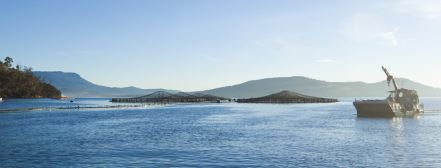 Tassal Backs Away from Dumping Treated Wastewater from Salmon Pens Back into Macquarie Harbour