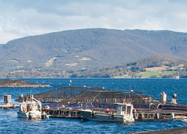 The Battle Over Big Salmon: Industry at a Crossroads as Tasmania Votes