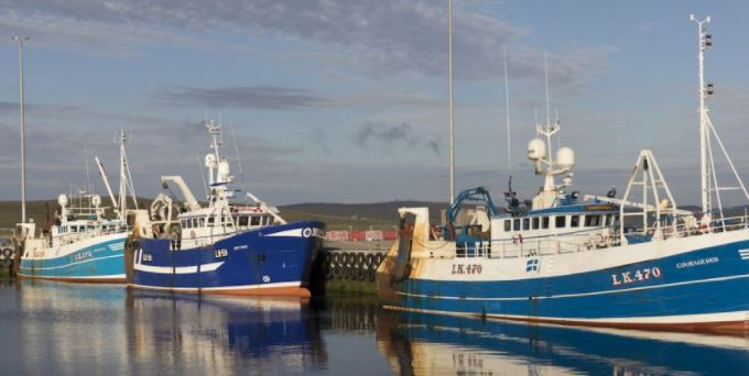 Record Whitefish Landings in Shetlands This Year