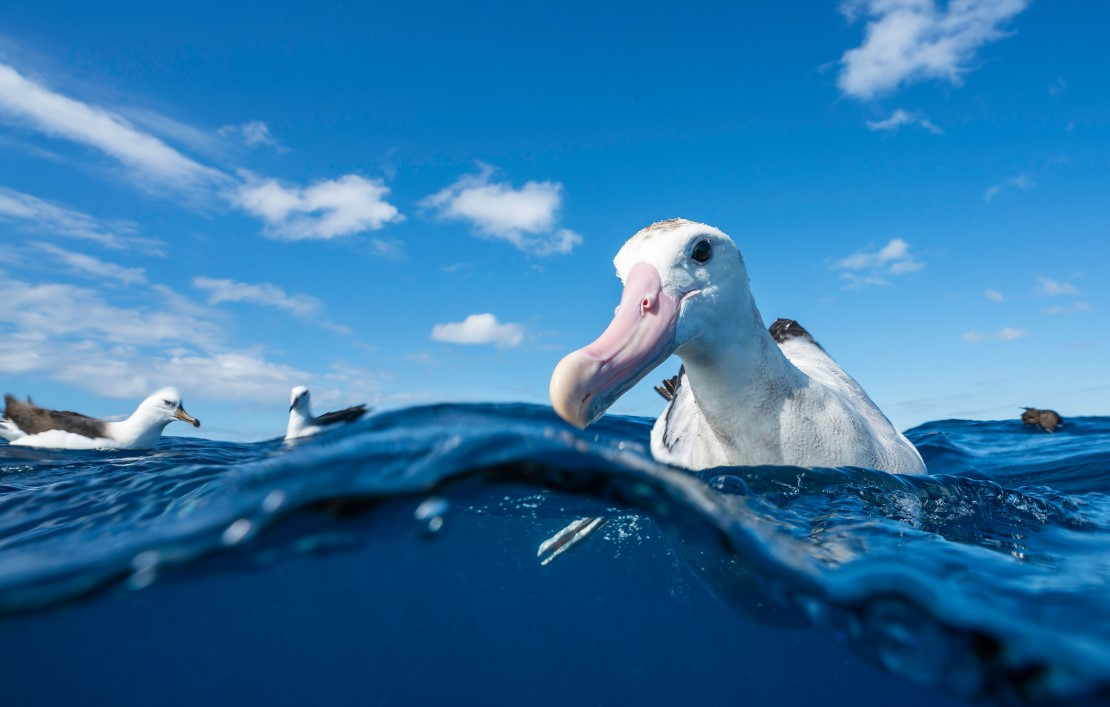 New Zealand First to Adopt the Hookpod, Saving Hundreds of Thousands of Seabirds