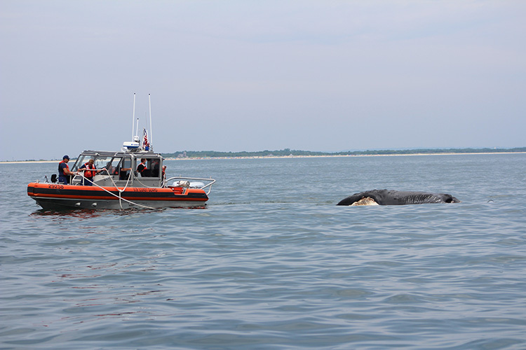NOAA: Vessel Collision Led to First U.S. North Atlantic Right Whale Death of 2020