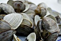 NOAA Says Environmental Factors Dropped East Coast Bay Shellfish Landings by 85% Since 1980