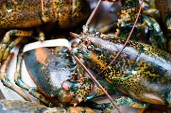 Lobster Import Volume Lower in June 2018, Still Higher YTD