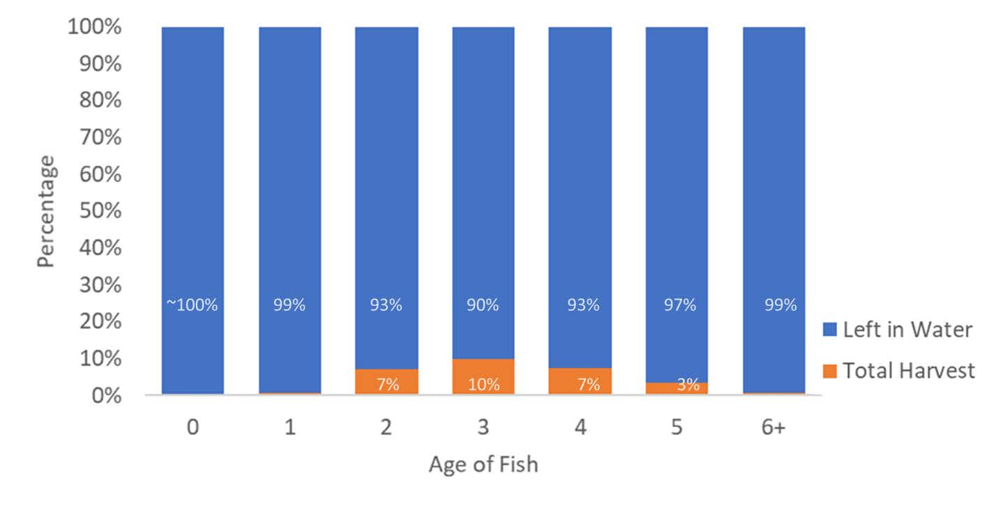Review Finds 99.5 Percent of Atlantic Menhaden Year Class Stay in Water to Serve Ecological Role