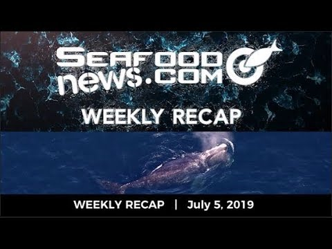 VIDEO: Maines Lobster Bait Crisis; Sea Shepherd Petition; Prime Day; Protecting Right Whales