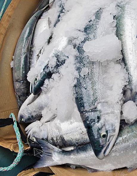 May Marks Official Start of Alaska Salmon Season
