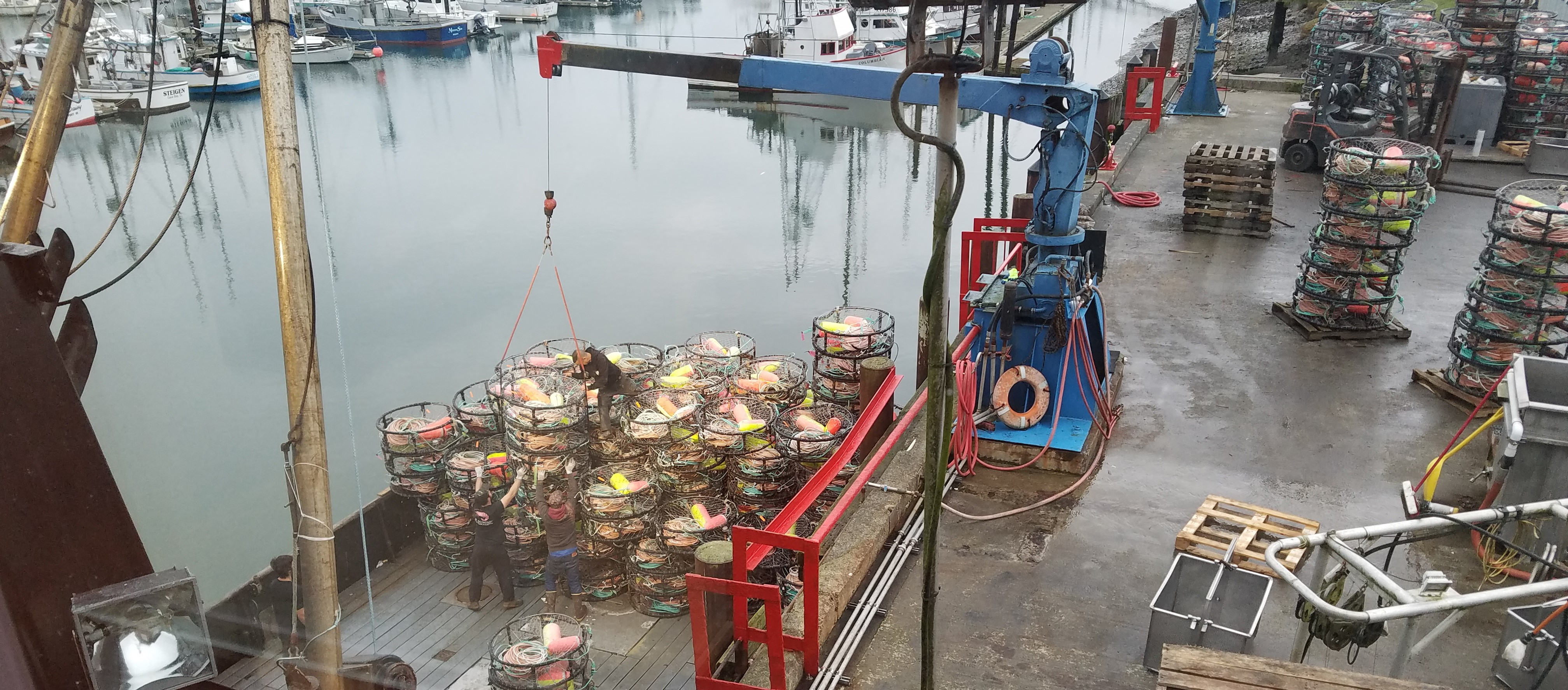 Dungeness Crab for Christmas? Ask the Whales to Leave