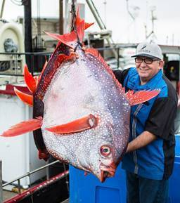 Catalina Offshore Gets Funding to Revive Opah Consumption in California, West Coast