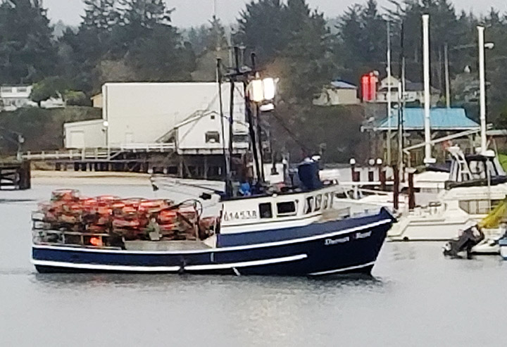 Dungeness Crab Fishery Opens in Southern Washington, Northern Oregon