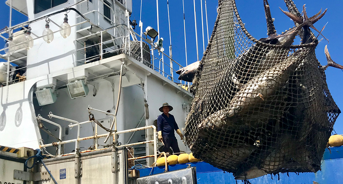 Bumble Bee, FCF and Ocean Outcomes Team up for FIP to Improve Indian Ocean Tuna Fisheries