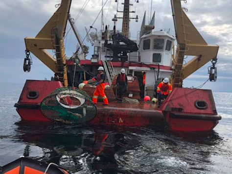 Canada's Northern Shrimp Harvesters Participating in Pilot Project to Reduce 'Ghost Fishing'