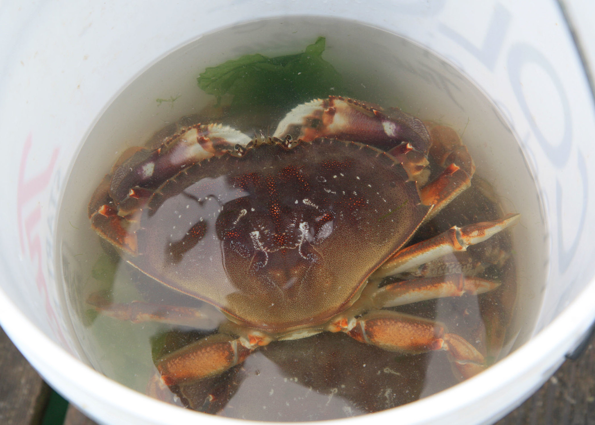 Eastern Oregon Couple on the Hook for $1,400 After Selling Dungeness Crab on Social Media