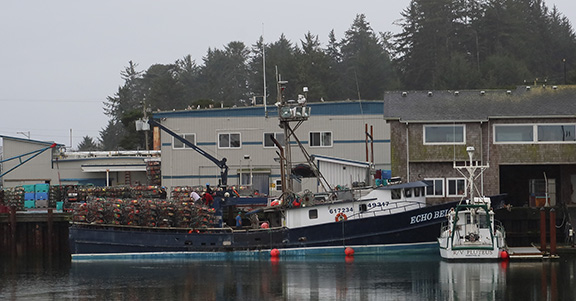 Washington Crab Season On Hold Beyond Jan. 15; Researchers Find Delays Force Fishing Changes