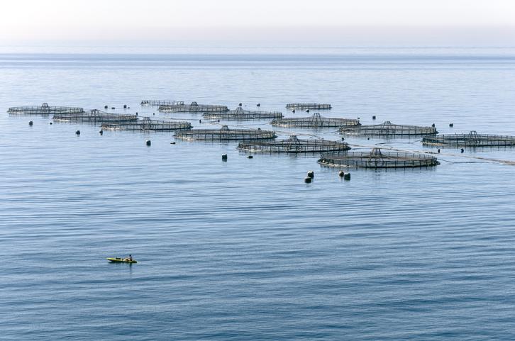 EU Aquaculture Report: Volume Remains Steady but COVID-19 Hurts Sales