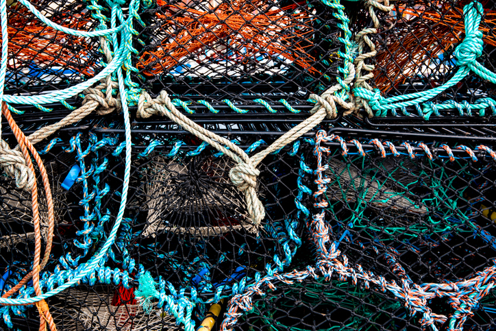 Maine DMR Open to Exploring Alternative Bait Sources for Lobster with Nordic Aquafarms