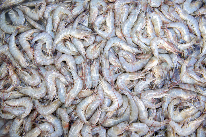 Rioting in Ecuador Hinders Shrimp Exports, Affecting Chinese Markets