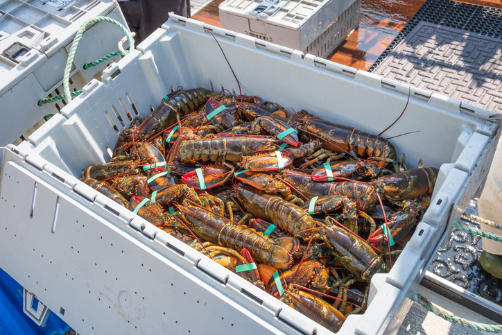 Massachusetts Representative Seeking Relief For Lobster Industry Affected by Trade War