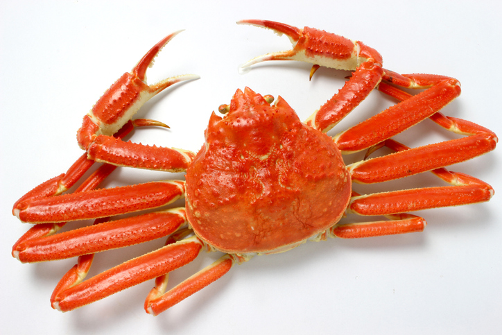 24 Million Pounds of Snow Crab Arrives in April and Disappears!