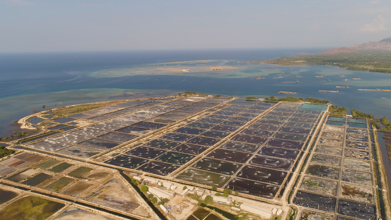 Uncertainties Shadow Shrimp Aquaculture Worldwide
