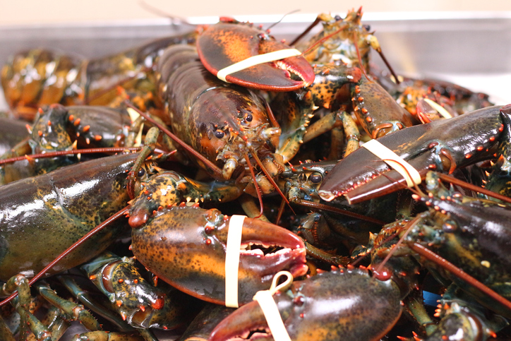 Coronavirus Update: Reports of Drop in Lobster Exports, Reduced Buying of Dungeness Crab