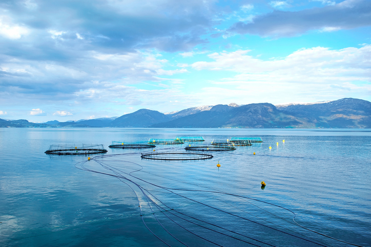 Global Salmon Initiative Looks to Boost Sustainability Efforts