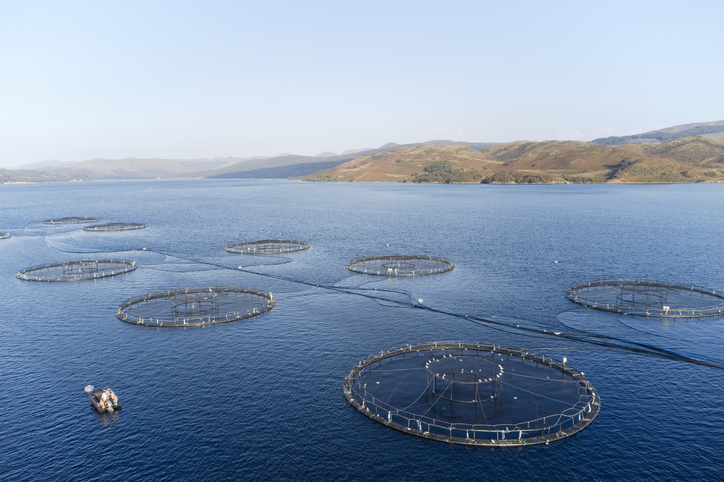 Seafood Scotland Shares Success Story as Foodservice Eyes Salmon After U.S. Beef Supply Disruptions