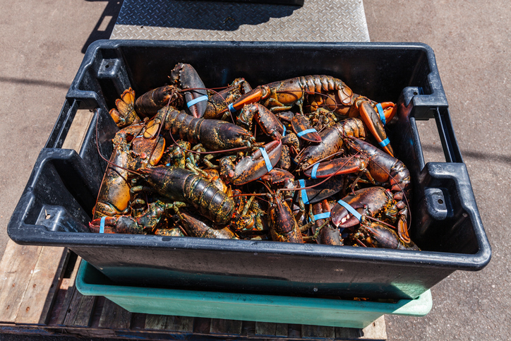 Lobster Dealers, Processors Say They Were Left Out Of Federal Aid Deal — And Some Blame Politics