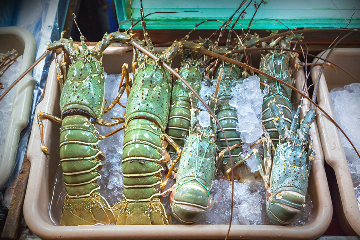 How the Coronavirus is Impacting the Lobster Industry Around the World