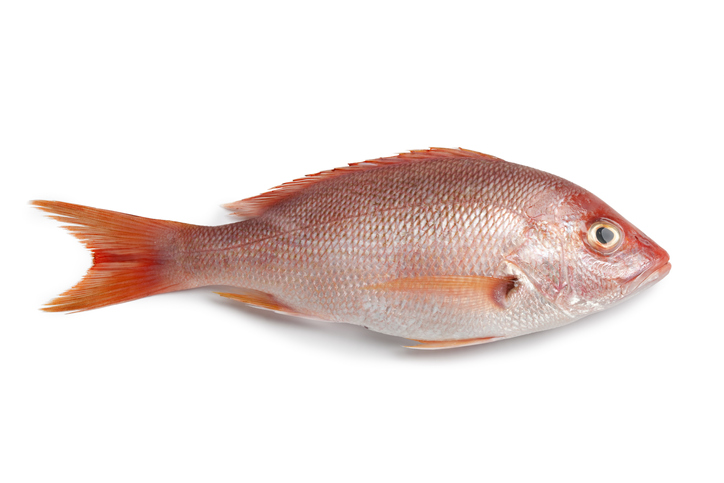 Senators Cassidy, Jones Introduce Bill to Improve Red Snapper Numbers
