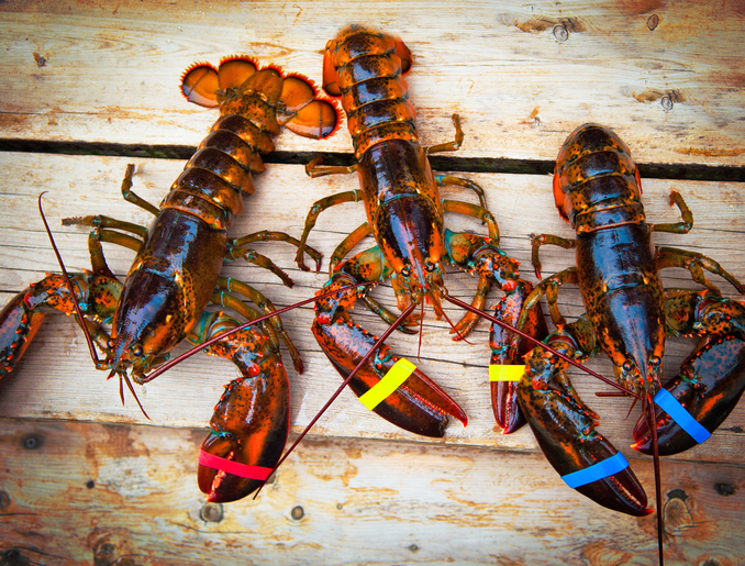 Lobster Orders Tank as Chinese Turn to Tariff-Free Canada