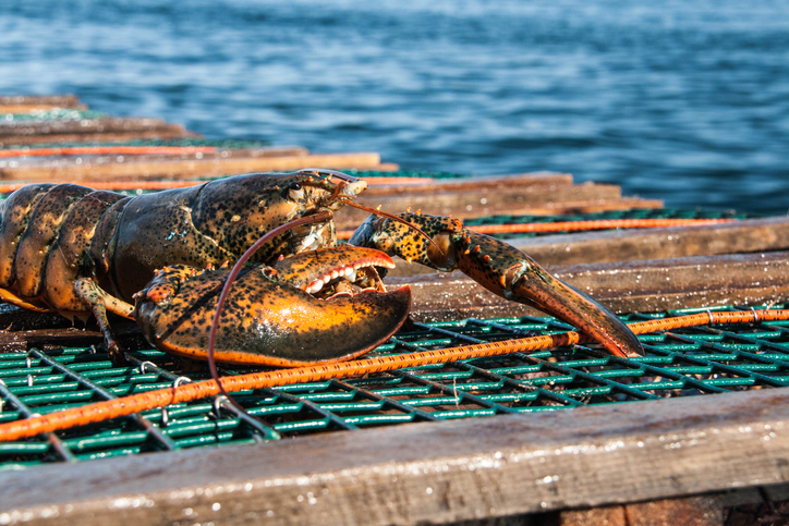 DFO: Gulf of St. Lawrence Lobster Season Extended to July 4