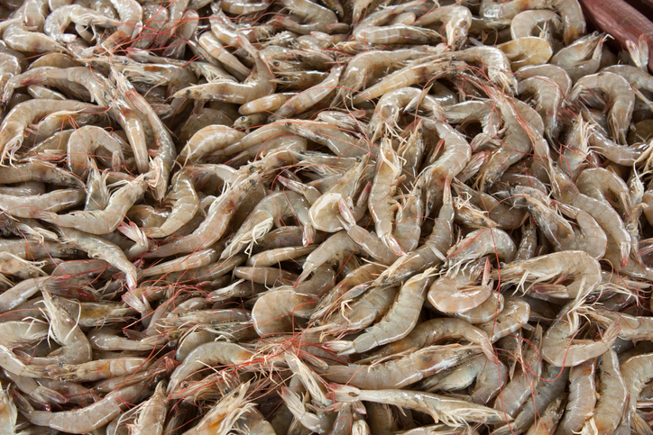 Shrimp From Ecuador to Re-Enter Brazil After Over Seven Month Suspension