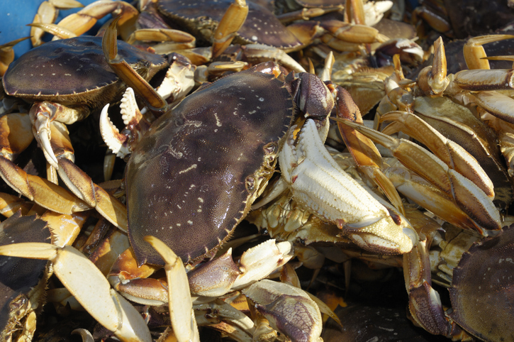 A Look at the Impact of COVID-19 on West Coast Seafood Processors, Key Species