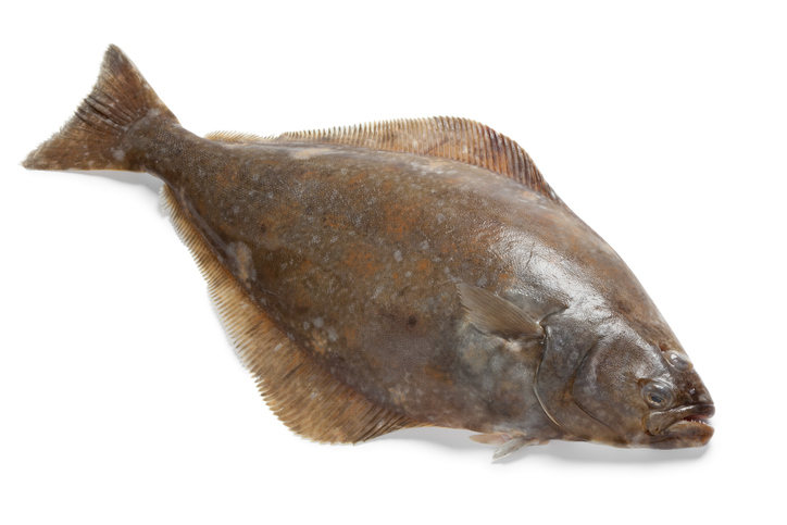 Halibut Show Impacts From Warming Waters