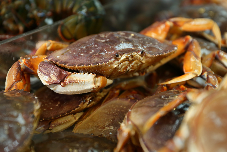 Commercial Dungeness Crab Season to Open in Sonoma County; Northern Area Remains Delayed