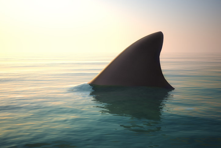 UK Government Introduces New Ban On Shark Fin Trade