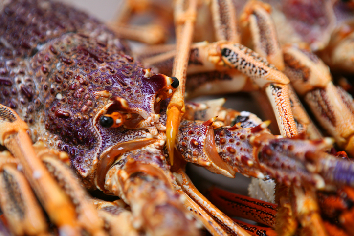 China Says No to Australian Lobsters