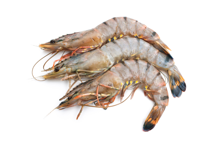 Urner Barry Launches Expanded Shrimp Market Coverage in Europe